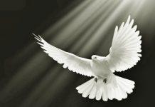 Законът на Моисей и Законът на Животворящият Дух - Иво Койчев